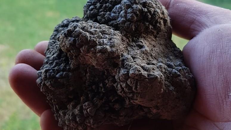 zwarte zomer truffel